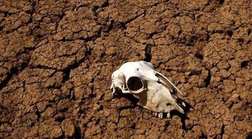 Sobreviviendo a la extinción masiva que se avecina
