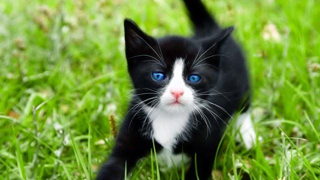 hình ảnh mèo con cực kỳ dễ thương