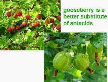 gooseberry health benefits 6