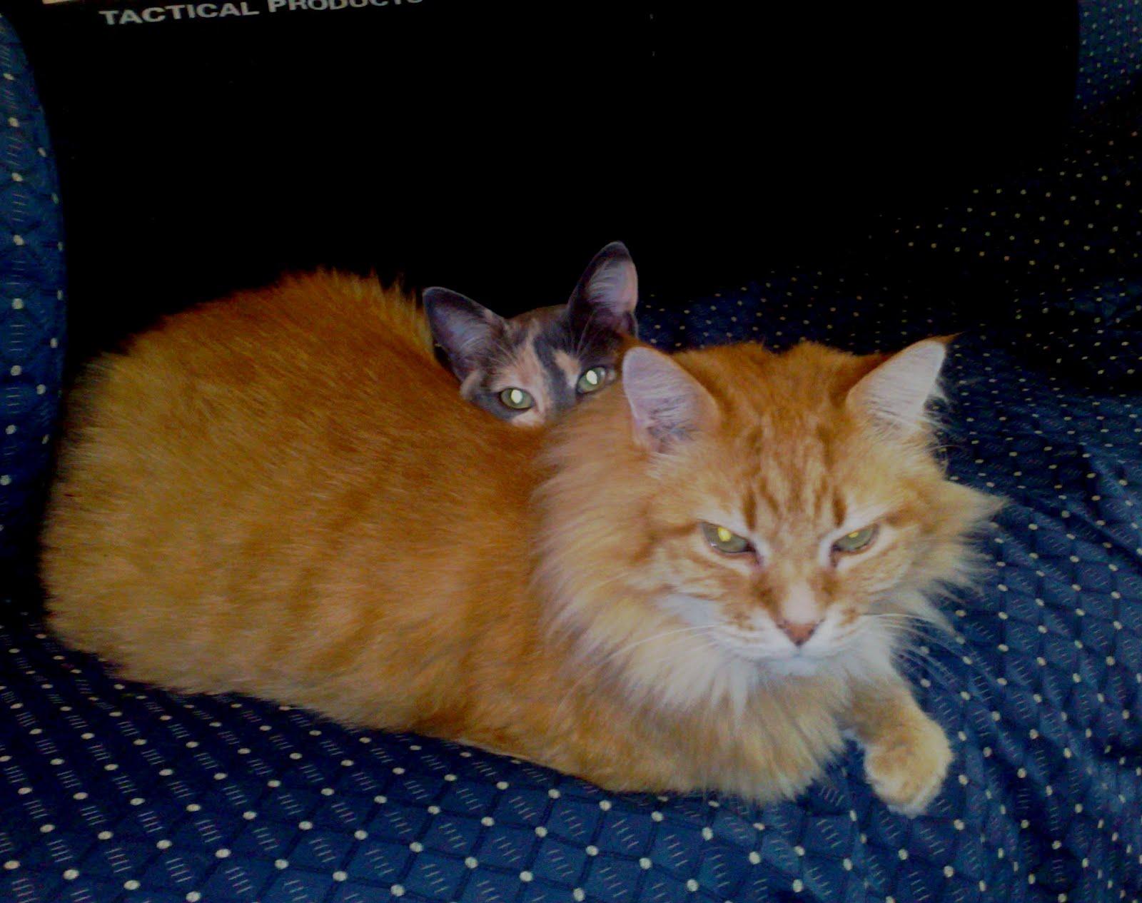 due dei miei amici mici