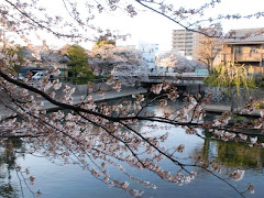 Ogaki in the spring