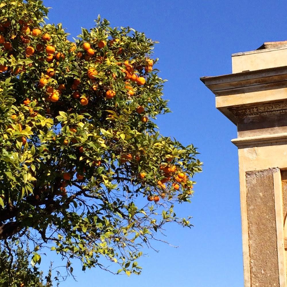 Orangenbaum in Rom