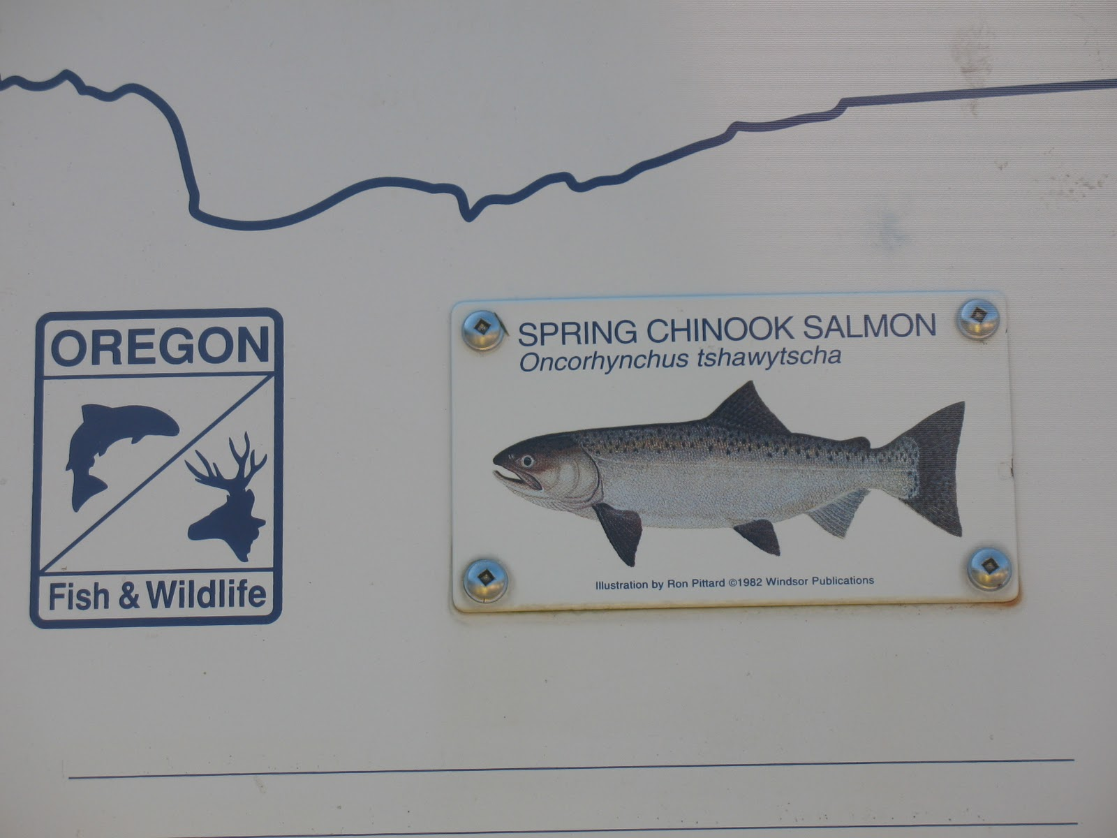 Blue 4 does more the tour of the oregon department of for Oregon department of fish and wildlife
