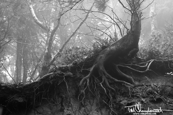 Tim Chandonnet Photography, lifestyle photography, Bellingham Washington Photographer, tree roots, nature, moody, olympic national park, forest, Temperete Rain Forest