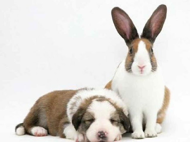 Puppy and bunny.