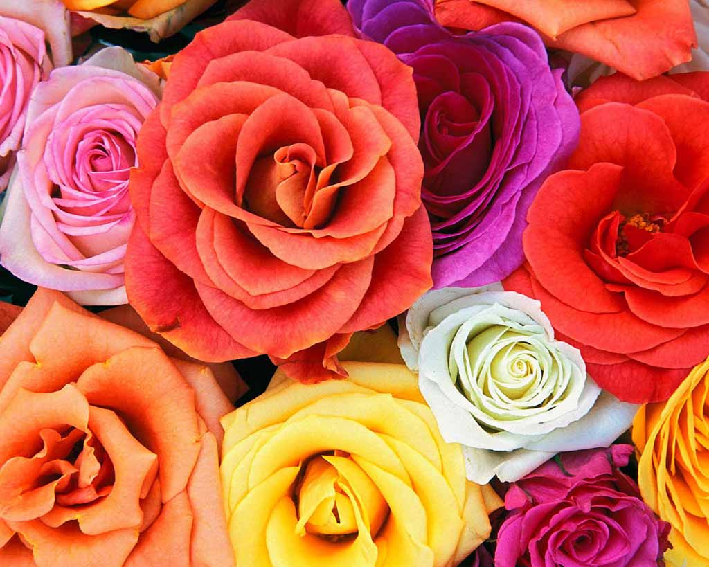 Beautiful Flower Nature Scenery