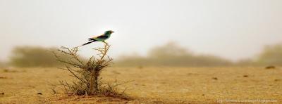 couverture facebook oiseau