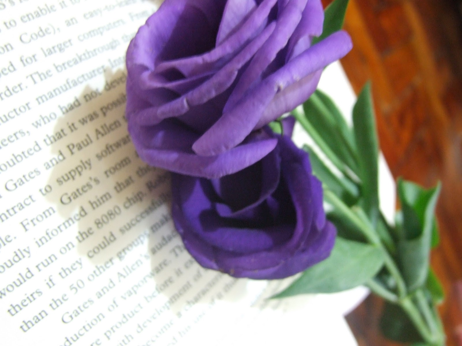 purple rose wallpaper Photo