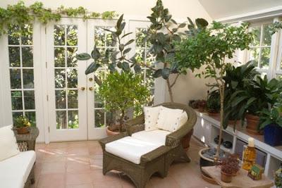 Sm steg mot dr mmehuset vinterhage inspirasjon igjen - Cool looking house plants ...