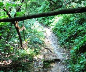 L'albero sul sentiero