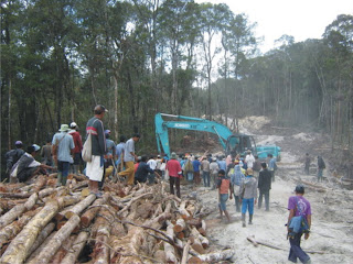 Oknum PNS Dishut Kabupaten Bima Diduga Jual Kayu ke Penadah