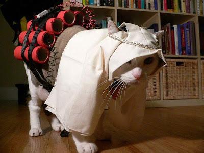 Кот-шахид! фото