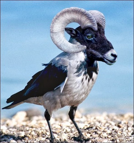 Photoshopped Hybrid Animals