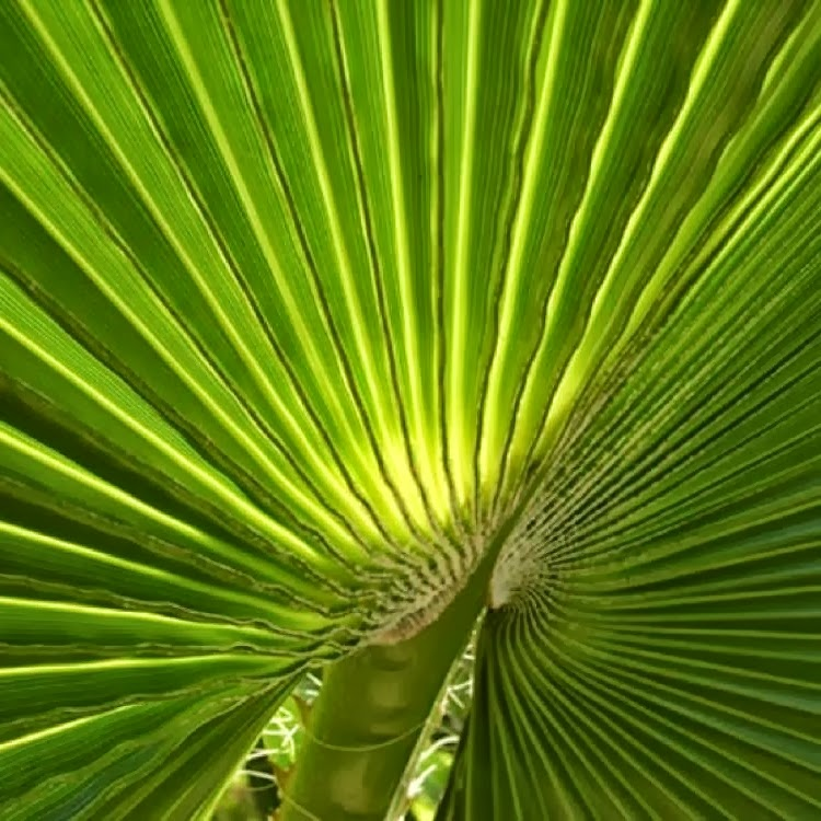 palme,storia, scienza, palms, story