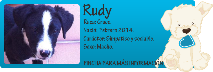 http://mirada-animal-toledo.blogspot.com.es/2014/05/rudy-cachorrin-en-adopcion.html