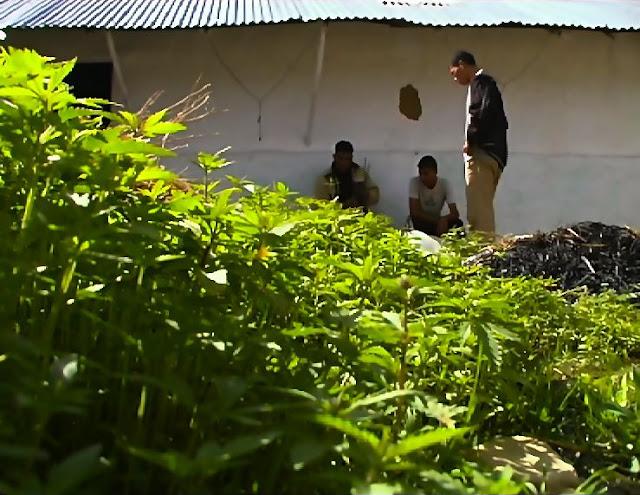 cultivo de marihuana en Marruecos por Hachero