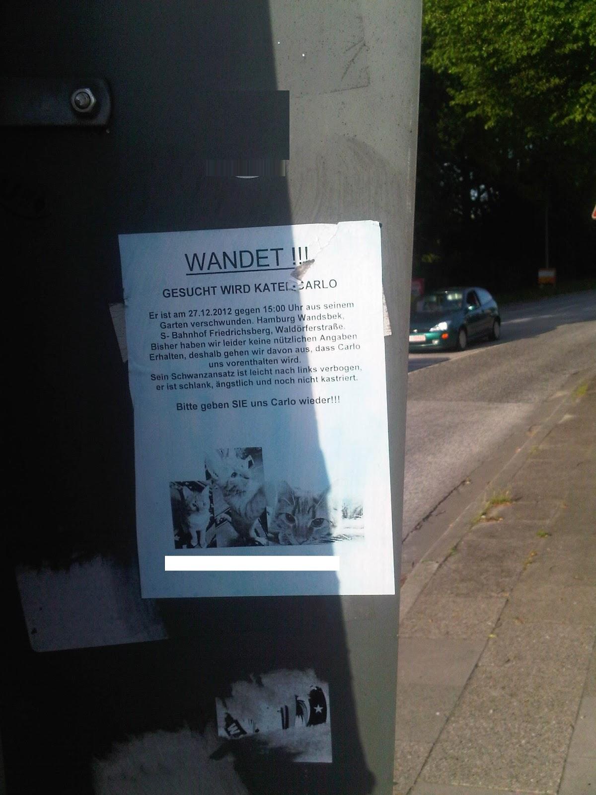 Zettel: Katze gesucht an der Ampel mit lustigem Rechtschreibfehler Wandet statt Wanted