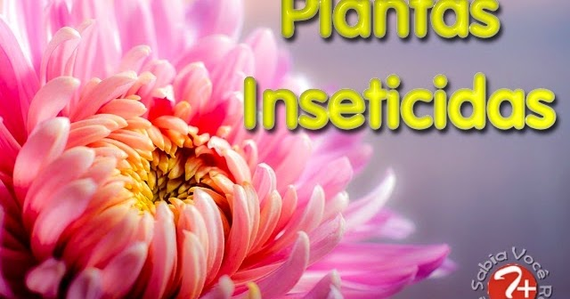 Plantas Inseticidas