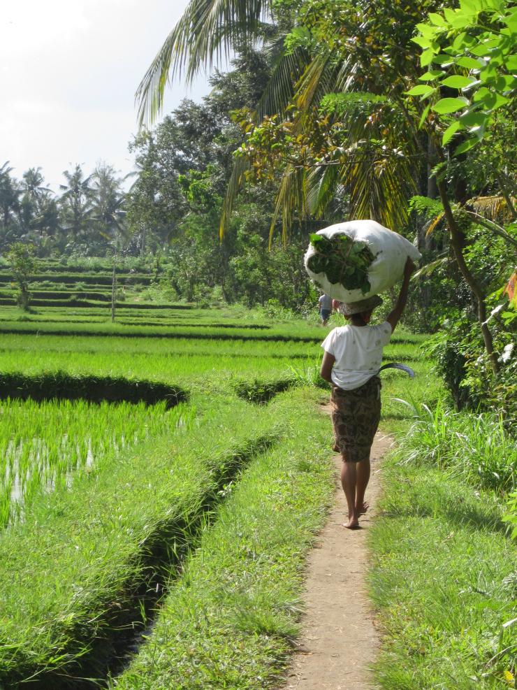 Ubud, Bali #travels