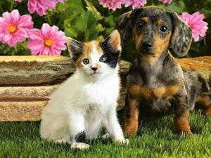 Respeite e cuide bem dos animais !!