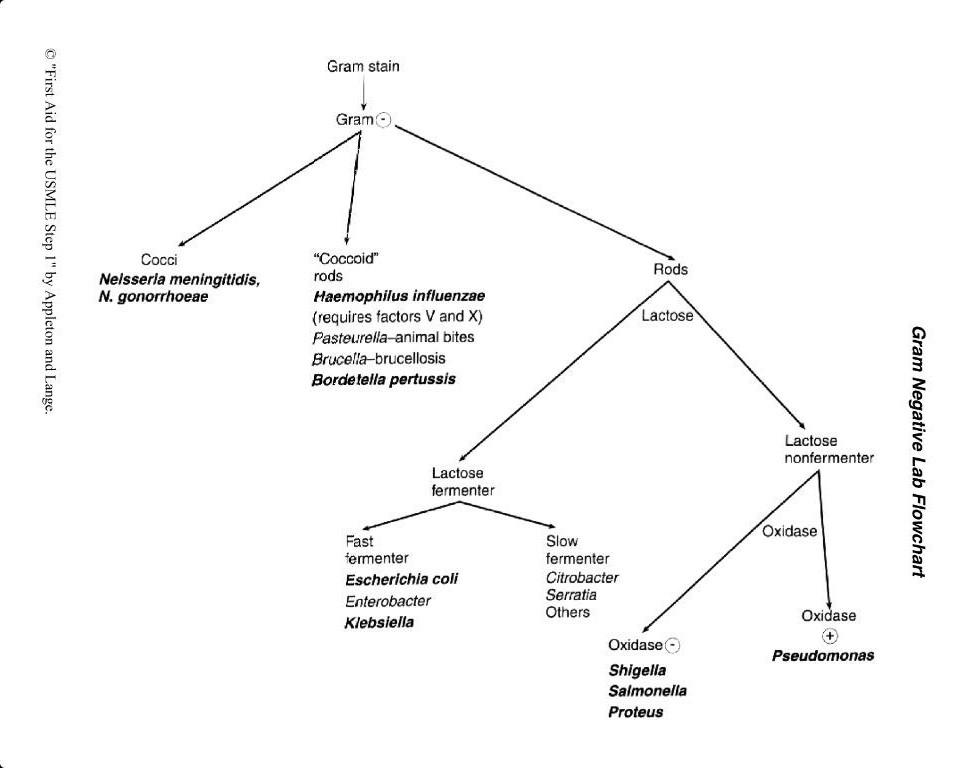 Gram Positive Cocci Flow Chart Ibovnathandedecker