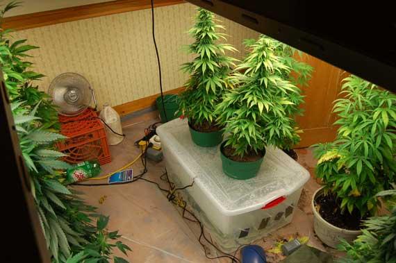 how to build a marijuana hydroponics settup