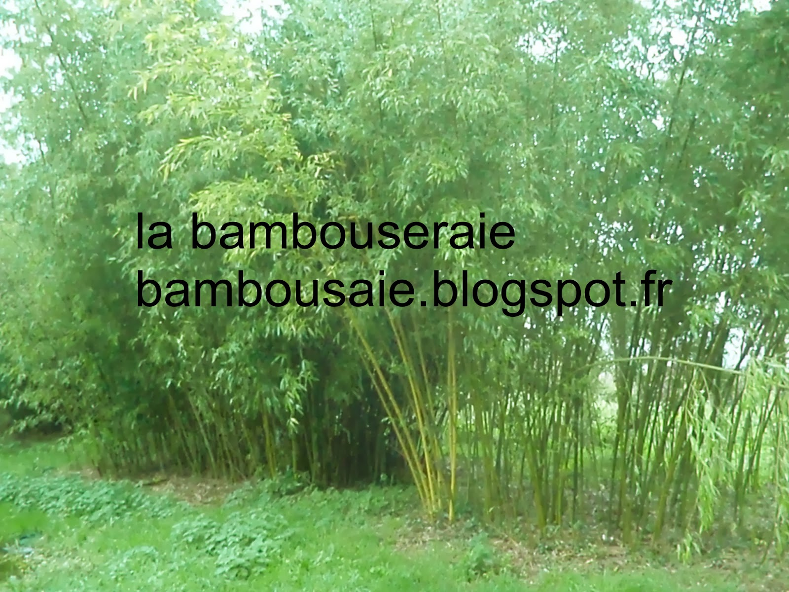 Brise vue en bambou for Bambou artificiel 2m