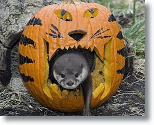 Funny halloween animals2-7