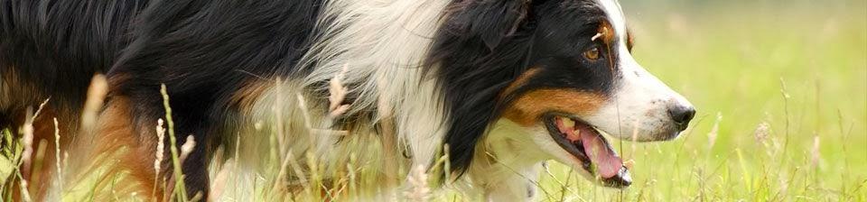 Nij Vyas Sheepdogs Blog