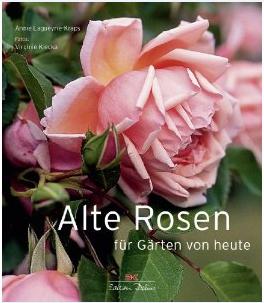 Meine besondere Empfehlung für Rosenliebhaber.