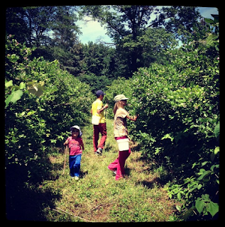 blueberry picking in MI