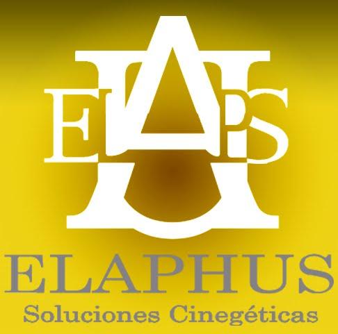 ELAPHUS