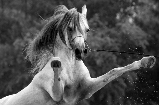 WAR HORSE JOURNAL