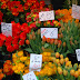 Des fleurs de Marché Maubert - XIV