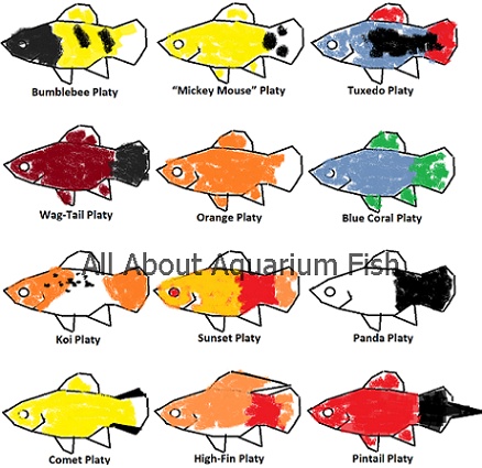 platy types colors