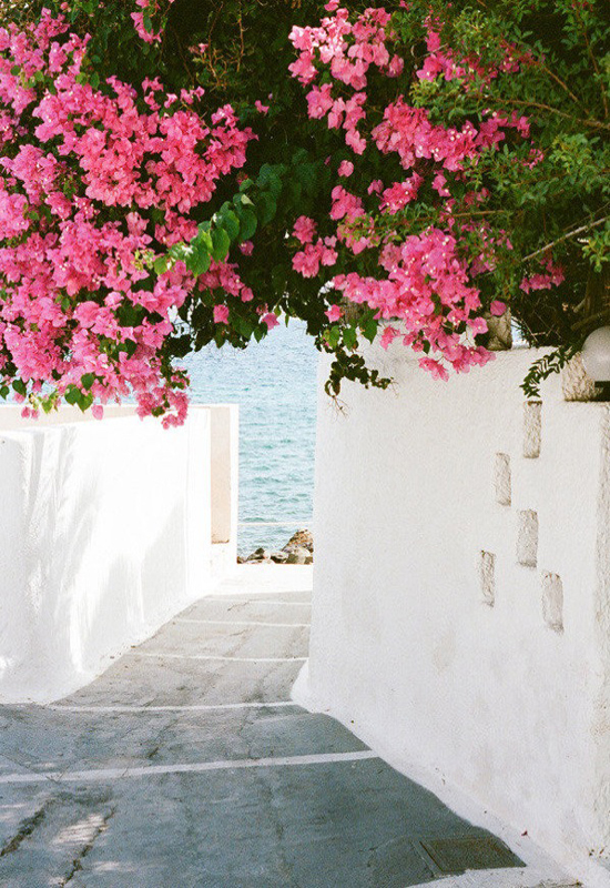 Bright and beautiful bougainvilleas at www.myparadissi.com