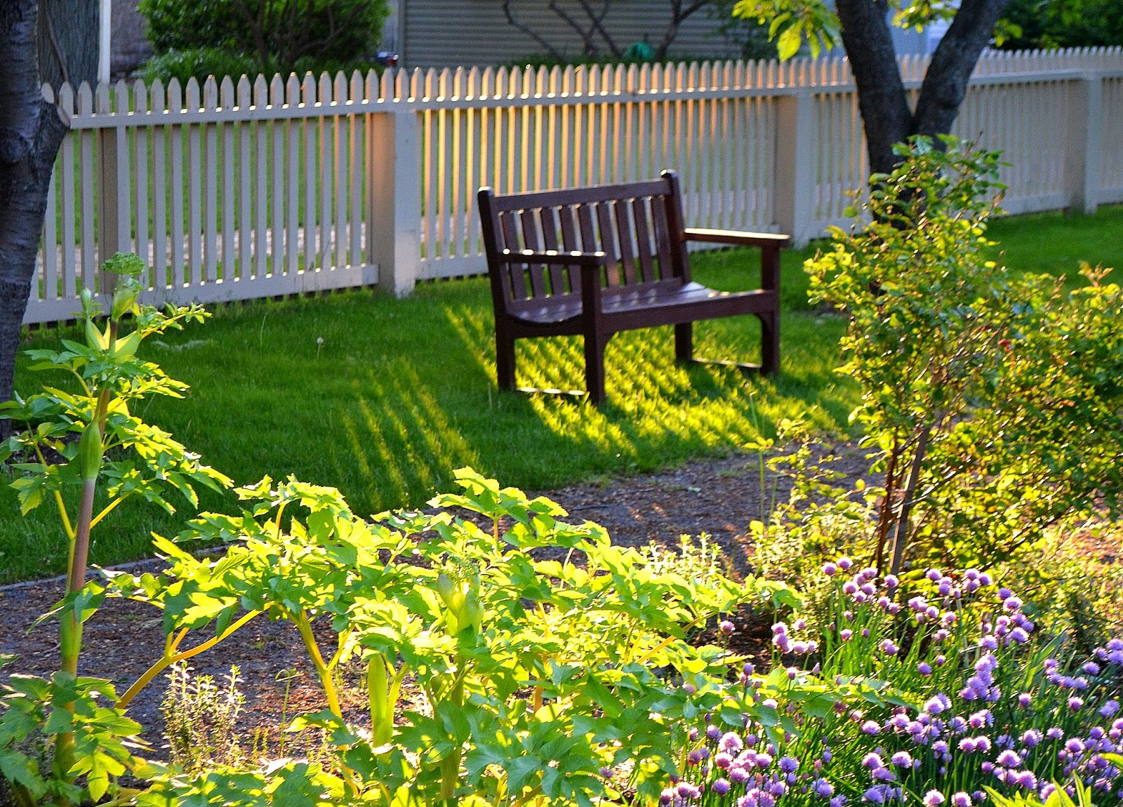 bench, garden, green, grass, summer, shadow, picket, fence