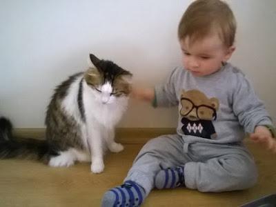 Bir Annenin Blogu - Kedi ve bebek ikilisi