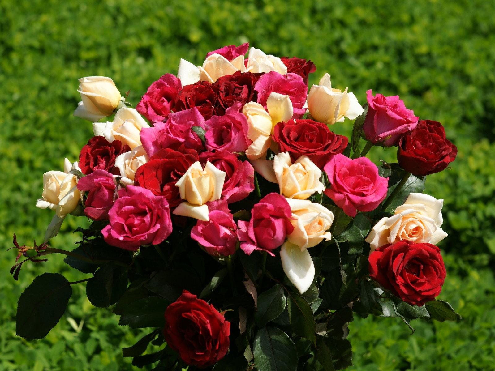 http://1.bp.blogspot.com/-QSXeyXgbOyU/Tdllf-qVOEI/AAAAAAAAAFM/_tXOQF_NWA0/s1600/8.jpg