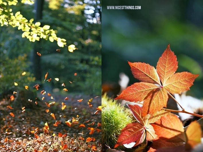 How To Autumn Photography Nicest Things