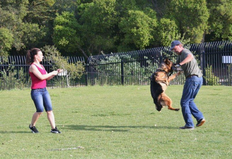 how to teach a german shepherd to attack