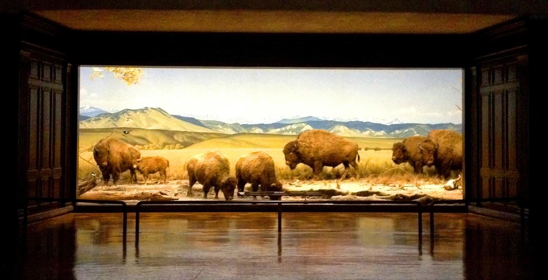 Natural History Museum Los Angeles Summer Camp