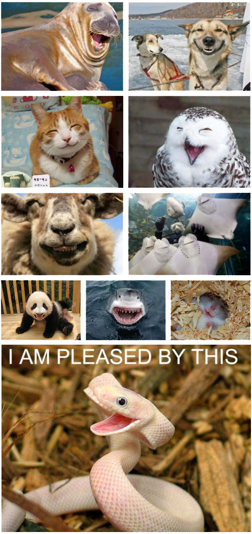 Animal Smiley Faces - I Am Pleased By This