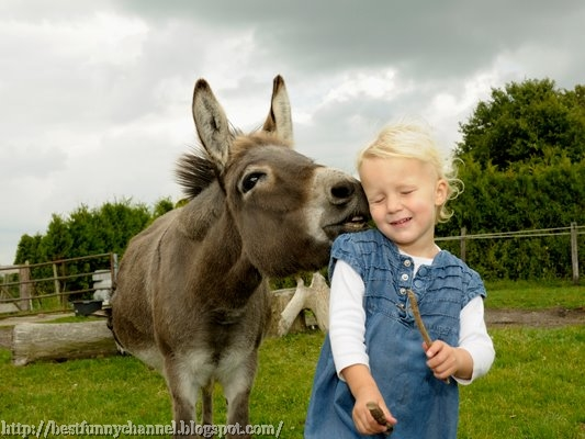 Funny donkey and little girl.