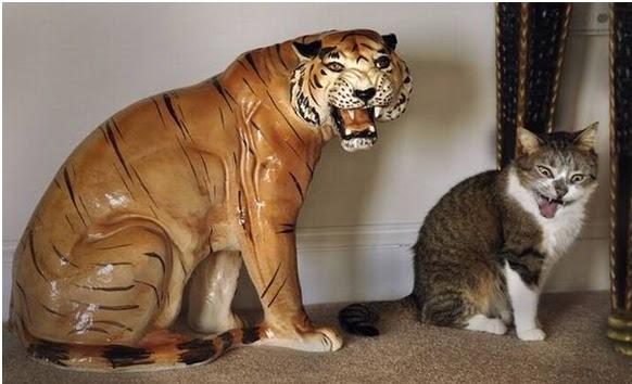 Pada Hemat Saya Anak Kucing Jadi Harimau
