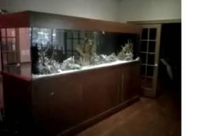 10 gallon fish tank craigslist huge aquarium for sale or for Craigslist fish tanks