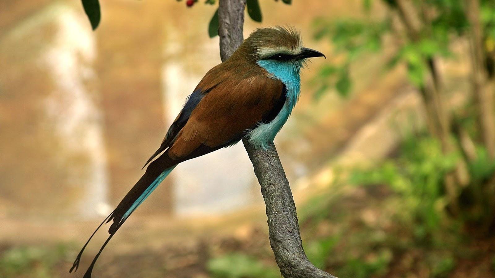 birds hd desktop wallpapers | whatsapp status, images, dp images