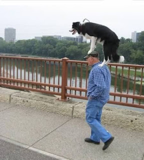 Funny Photos of Walking A Dog