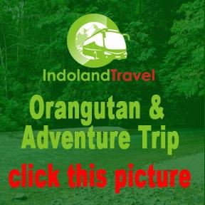 Orang Untan and Pulau Weh Trip