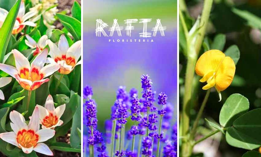 decoración de jardín, plantas, flores, consejos para decorarlo floristeria rafia ourens